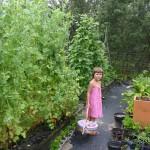 the rosy garden