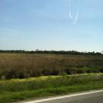Driving the Ozello Trail