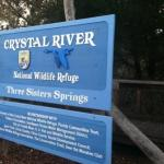 Looking for Manatees? Try the Three Sisters Springs