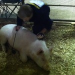 Swine Auction SEYF