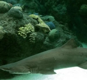 Really cool sharks at the Florida Aquarium
