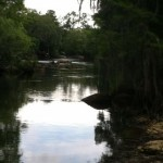 Canoeing the Withlacoochee River