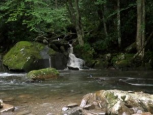 Creek by Little River Road, Great Smoky Mountain National Park.