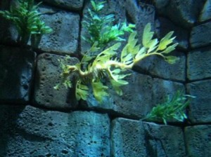 Who said dragons aren't real? A Sea Dragon at SeaWorld.