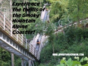 Experience the downhill thrills of the Smoky Mountain Alpine Coaster in Pigeon Forge.