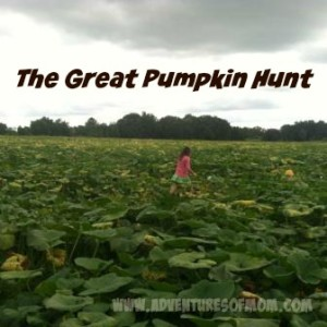 5 reasons to visit your local pumpkin patch