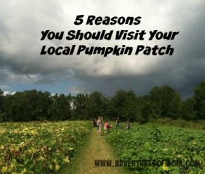 5 reasons you should visit your local pumpkin patch