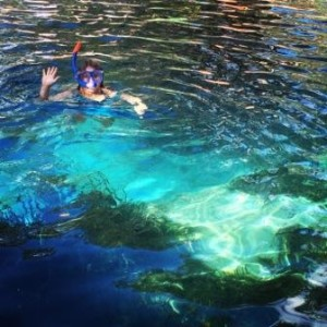 Snorkeling the springs in Florida at Christmas!