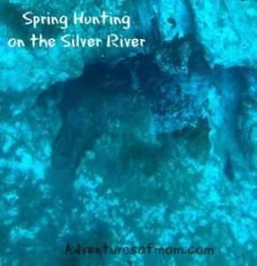 The springs were caves, cracks or just holes in the sandy river bottom, spewing out gallons and even millions of gallons of fresh water.