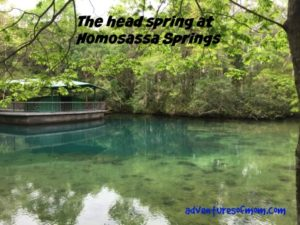 Spring hunting at Homosassa springs, a 1st magnitude Florida spring