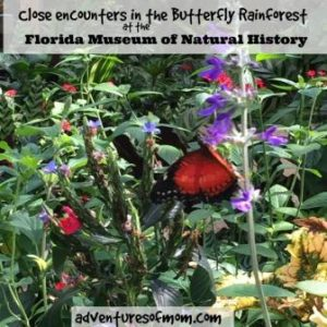 Explore the butterfly rainforest at the Florida Museum of Natural History