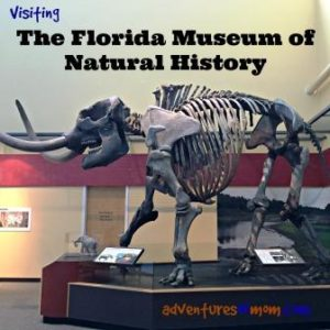 Run by the University of Florida, the Florida Museum of Natural History is kid-friendly and free!