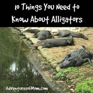 Knowledge is power: keep your family safe from alligators.