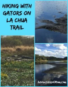 Hiking with Gators on Gainesville's La Chua Trail