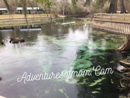 A quiet swimming hole now, Hart Springs in the winter. Found during our Florida spring hunting 2016 adventures.