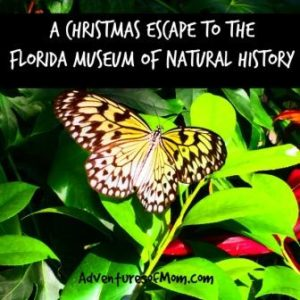 Escape the Christmas shopping madness and check out the Florida Museum of Natural History