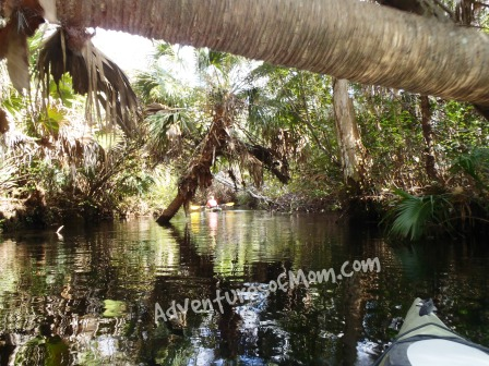 """Playing the """"limbo"""" game under a palm tree on the Juniper Run paddle trail."""